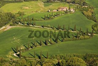 Zypressenallee bei La Foce, Toskana, Italien, cypress alley at La Foce, Tuscany, Italy