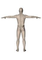 Mann_stehend_Skelett_hinten_weiss