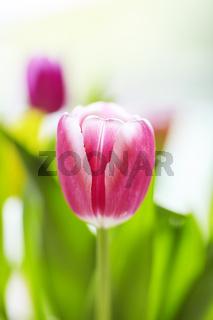 Frühlingshafter Tulpenstrauss