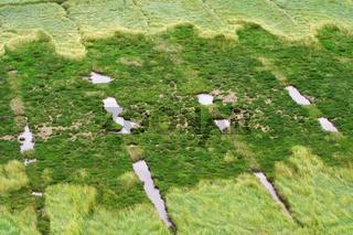 Salzwiesen Westerhever