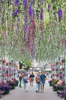 People walk along the avenue, adorned with flowers, hanging vertically