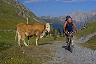 Sommerurlaub auf der Alm / cyclist and cow