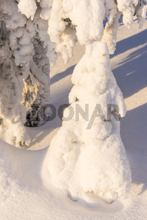 verschneite Fichten, Riisitunturi Nationalpark, Lappland
