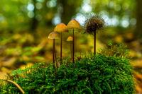Pilze auf gruenen Moos
