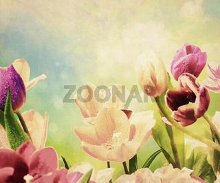 tulpen tropfen textur nostalgisch