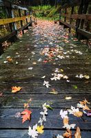Colorful Autumn Leaves on a Wooden Foot Bridge