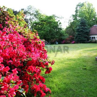 Garten mit Rrhododendron-quadratisch -