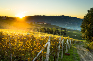 beautiful vineyard in switzerland in blue sky