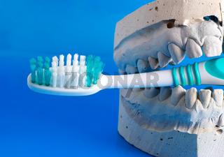 false teeth holds a tooth brush