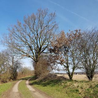 Knick und markanter Baum an einem Feldweg in Norddeutschland