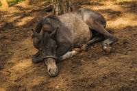 relaxation horse