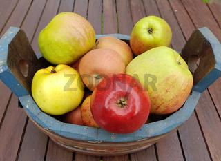 Alte Apfelsorten, verschiedene, Apfel, Malus, domestica, Aepfel
