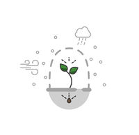 Timeline infographic of planting tree process, business concept flat design