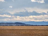 Landschaft im Nordburgenland mit Rosaliengebirge und Schilf