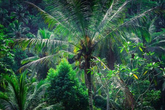 Rainforest tropical nature