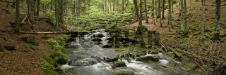 Bach im Nationalpark Bayerischer Wald, Creek in Bavarian forest national park