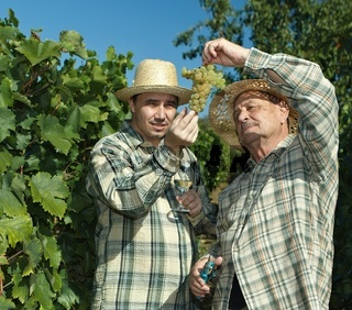 Vintners examining grapes