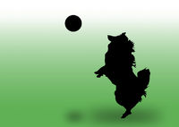 hund springend, silhouette