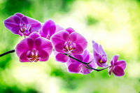 Stunning purple orchids