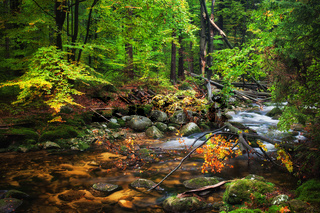Forest Stream With Fallen Tree