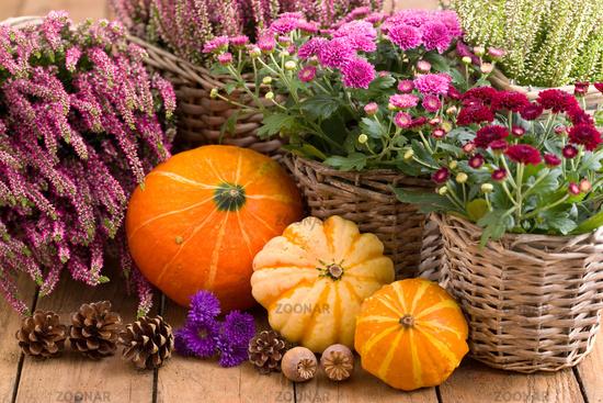 Herbstblumen und Kürbisse