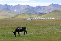 Maultier und Jurtenlager am Songköl-See (Son Kul, Song Kol), Kirgisistan