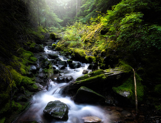 Flowing stream through green mossy forest