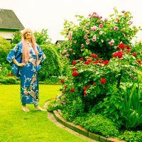 Schöne Rosen im Garten