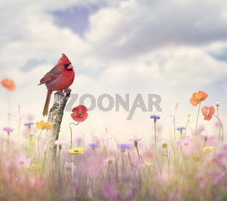 Cardinal bird in a flower field