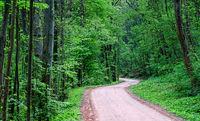 Road through a dark green forest