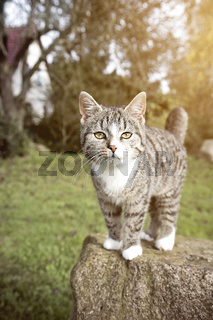 cute cat staying on a rock