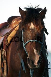 Horse face.