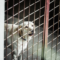 Dog locked in a cage