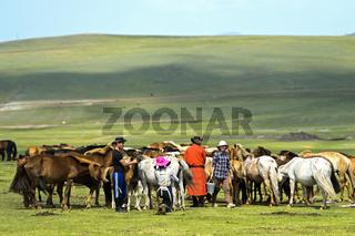 Mongolischer Hirten beim Melken einer Herde Sturten in der Steppe