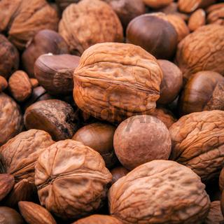 Different kinds of nuts in shells ,cashew, almond, walnut, hazelnut, pistachio, hazelnuts, pecan and macadamia.