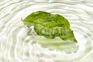 Green leaf with water reflection