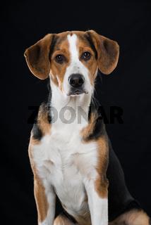 Mischlingshund