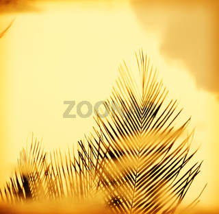 Sunset Palm Fronds