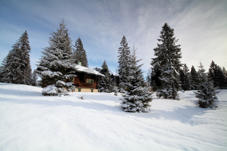 hut between spruce trees in winter