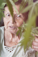 Shocked senior woman with Cannabis plant