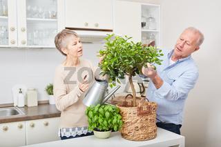 Senioren Paar kümmert sich um Obstbaum