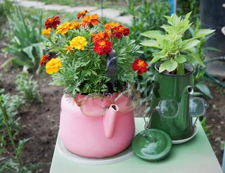 Old kettles used in garden design