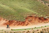 Mountain biker on rural road