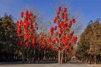 Geschmückte Bäume im Ditan-Park am Pekinger Erdtempel