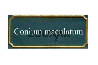 schild Schierling,gefleckter,Becherkrautige Pflanze,Maeusedolde,Conium maculatum