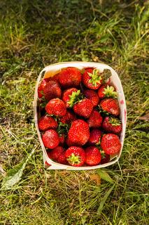 Erdbeeren, strawberries