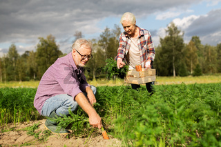 senior couple with box of carrots on farm