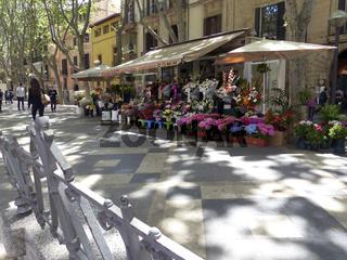 Blumenladen - La Rambla - Palma de Mallorca