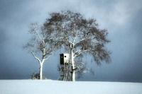 Snow powdered landscape