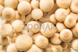 brown shimeji mushrooms
